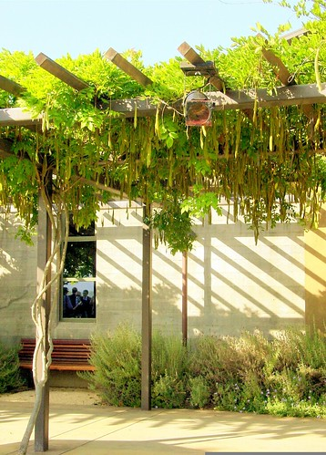 Wisteria Arbor at Stryker Vineyards