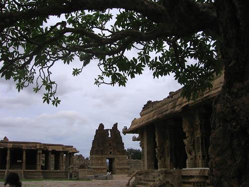 vittallla tree