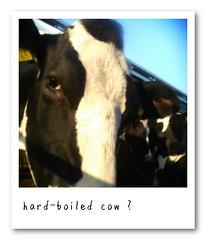 hard-boiled?