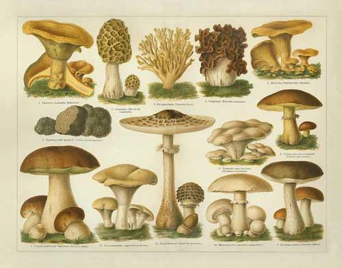 mushroom-plate1