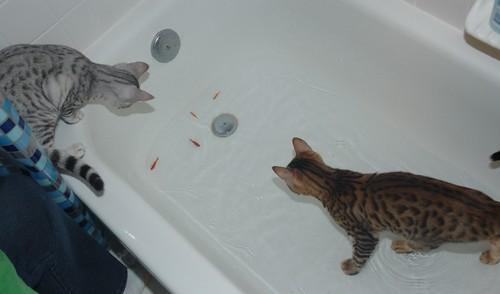 in-tub