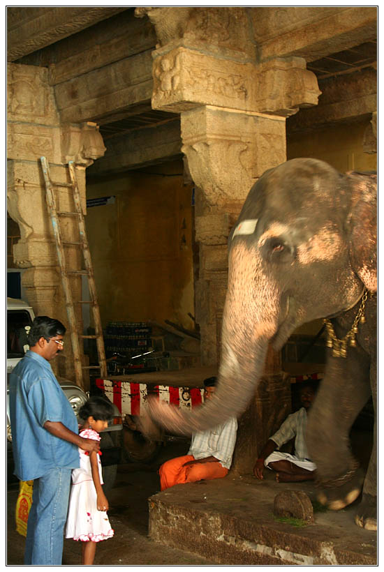 Trichy : Elephant Blessing