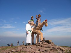 Camel on the summit of Pen y Fan