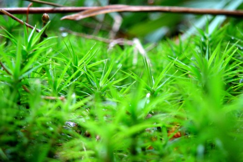 Green dream in the moss II