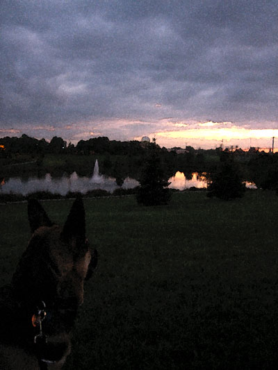 dog looking at fountain at dusk