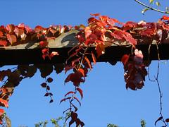 Herbstimpressionen5