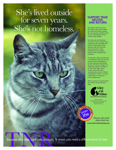 National Feral Cat Day - October 16, 2006
