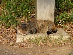 上野の猫#3