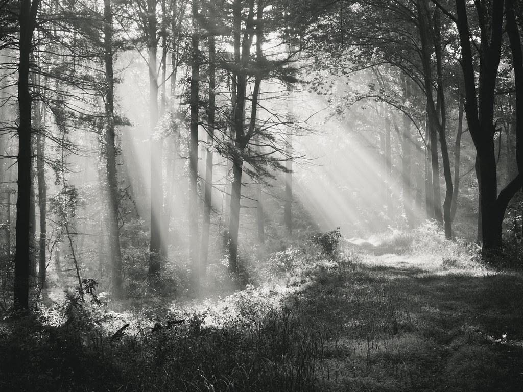 Limbo {explored} photo by .monodrift