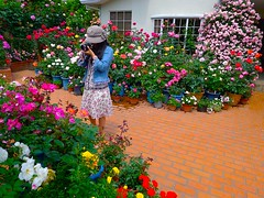 Rose Garden Cafe:玫瑰的珈琲店 photo by love_child_kyoto