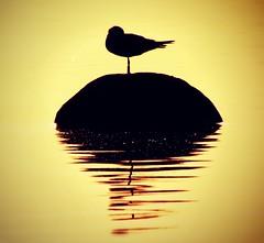 A Black Sun photo by | Tico|