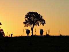 Quarta Sunset photo by Eliana Lúcio