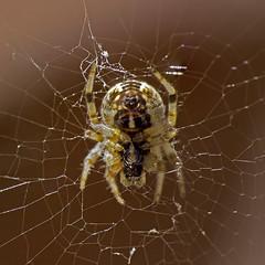 Along came a spider... photo by Kartik J