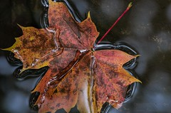 22092012 (Explore front page) - Leaf Asdølsjuvet (Asdoel Gorge) photo by Torstein aka TR