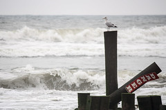 Danger: Atlantic City Beach photo by drpavloff
