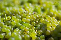 Green Grapes photo by Felix Schmidt Photography