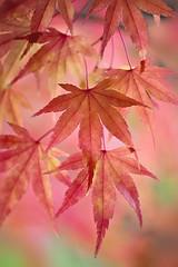 Subtle Changes photo by Jacky Parker Floral Art
