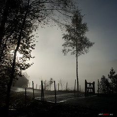 The shiny cattle grid photo by bent inge