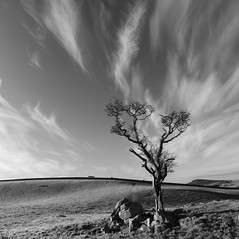 Corra Tree - B&W photo by Mike Bolam
