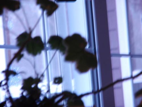 Blurry Plants