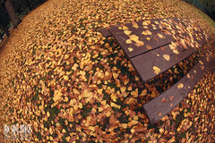 My Autumn World Has Been No Picnic photo by Ian Sane