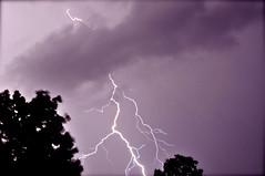 Violet Storm photo by Elizabeth Hagearty