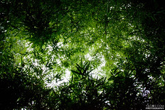 Vivid Bamboos Sky (VBS) photo by yago1.com