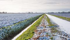 Dutch countryside in winter photo by RuudMorijn