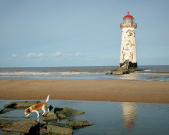 Lighthouse & dog - North Wales photo by fleeting glimpse2009