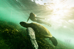 The Turtle King photo by Karim Iliya Photography