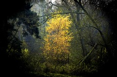 Autumns Light photo by Moments In Time..