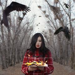 ravens photo by {imbir}