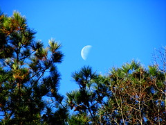 Moon romances the pine trees photo by Sam0hsong