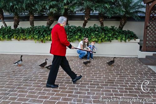 peabody hotel duckmaster-4.jpg