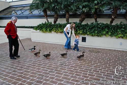 peabody hotel duckmaster-3.jpg