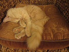 Sweet Slumber photo by ( r i t a lilly )