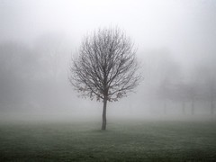 Lost in the fog Explored #25 8th January 2013 photo by Broo_am (Andy B)