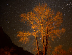 Tree and Stars, Zion NP photo by benalesh1985