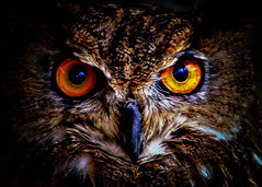 Eyes of an Eagle owl. photo by The world as eye see it. 1.9 million views.