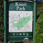 Kauri Park - Auckland's biggest Kauri trees.
