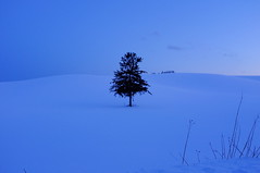 クリスマスツリー photo by ( ´_ゝ`) Sho