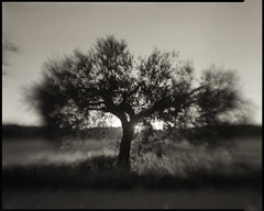Meniscus olive tree photo by rabato