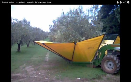 olive harvesting machine03