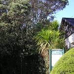 Kauri Park - Auckland's biggest Kauri trees