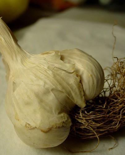 Italian Pink Hardneck Garlics (3)