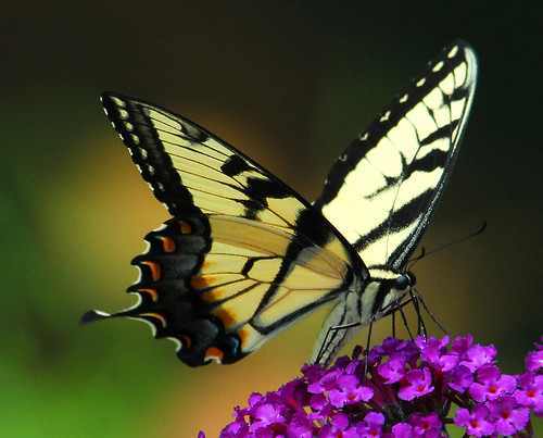 Swallowtail Butterfly Three, Bon Secours Spiritual Retreat