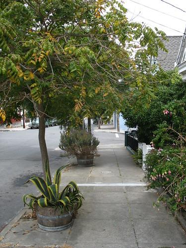 street planting