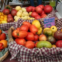 3253-tomatoes