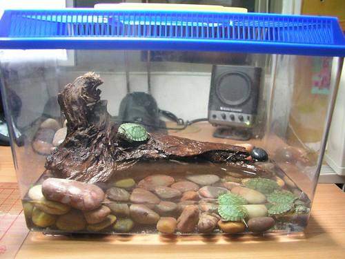 Annie 的巴西烏龜-01