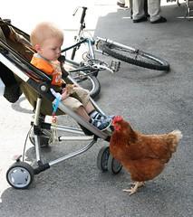Moritz und die Henne